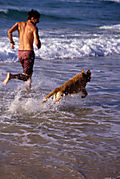 Man and Dog Running - istock_000003768984xsmall