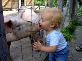 090501 Kissing a Pig 325p