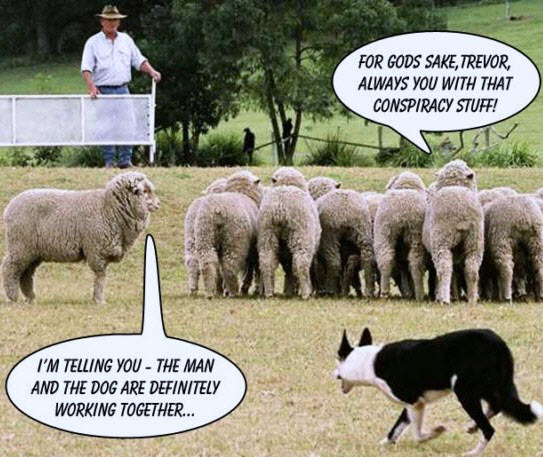 100904 Sheep-notices-man-and-dog-working-together