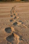 100913 elephant-tracks