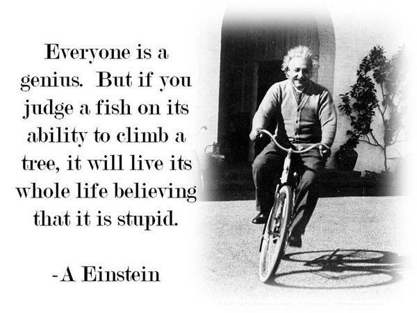 Everyone Is A Genius - But If You Judge A Fish On Its Ability To Climb A Tree - It Will Live Its Whole Life Believing That It Is Stupid - Albert Einstein
